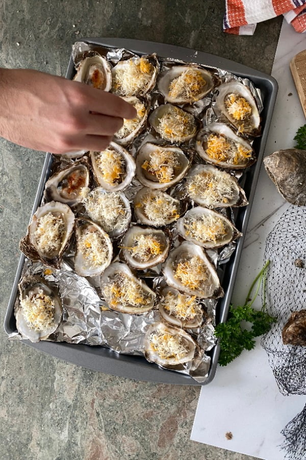 Sprinkling cheese on bivalves